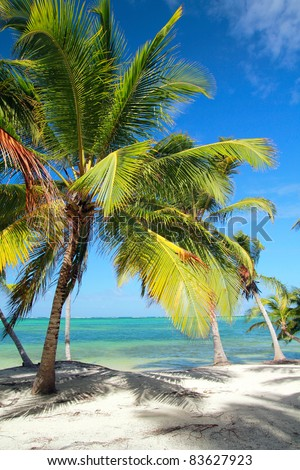Beautiful palm on tropical beach, caribbean sea
