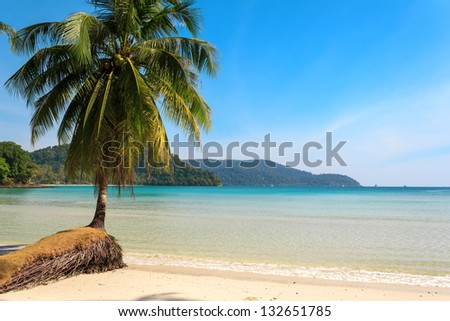 Beautiful palm tree on a tropical island beach - stock photo
