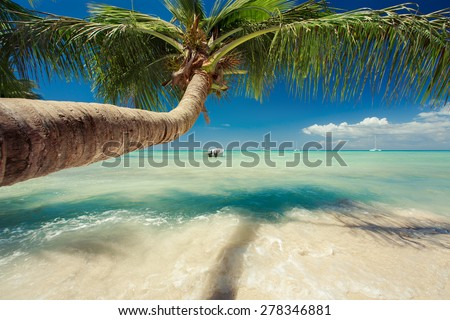 Beautiful palm tree over caribbean sea - stock photo