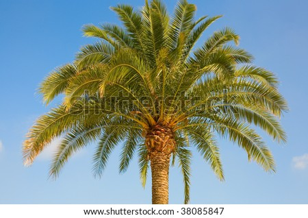 Beautiful palm tree over the blue sky