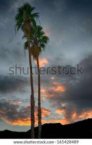 Beautiful Palm trees against a sunset sky - stock photo