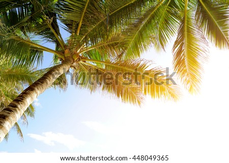 Beautiful palm trees at beach - stock photo