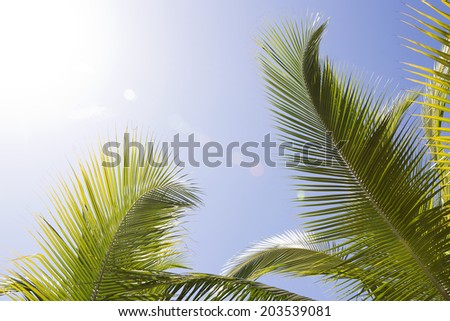 Beautiful palm trees in Africa with blue sky - stock photo