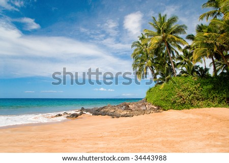 beautiful palm trees on sandy secluded beach in south maui, hawaii