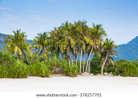 Beautiful palm trees under blue sky, scenic view