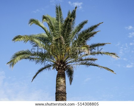 beautiful palm with blue sky