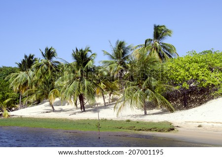 Beautiful palms and beach in Jericoacoara in Brazil