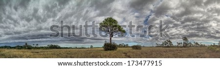 Beautiful Panorama landscape in the Big Cypress National preserve - stock photo