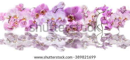 Beautiful panoramic collage background of pink orchid flowers. Phalaenopsis orchid flower is like a tropical butterfly. - stock photo