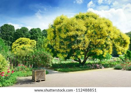 Beautiful park. - stock photo