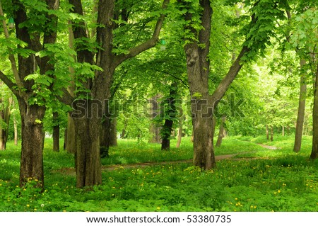Beautiful park alley in summer - stock photo