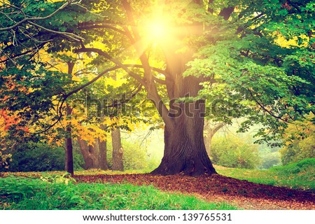 Beautiful park tree - stock photo