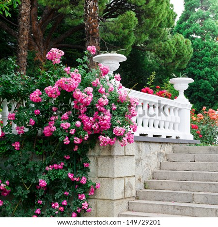 Beautiful park with blooming roses - stock photo