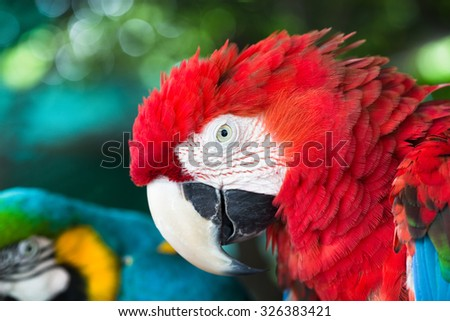 Beautiful parrot bird, Beautiful macaws bird, head profile in a zoo