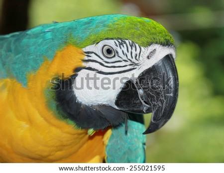 Beautiful Parrot head closeup - stock photo