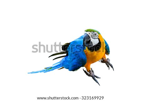 Beautiful parrot in the zoo isolated on white background - stock photo