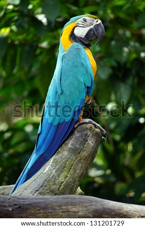 beautiful parrot on a wood