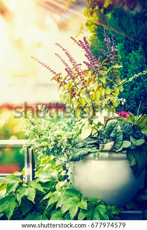 Beautiful Patio Flowers Pot On Balcony Or Terrace In Sunset Light. Urban  Container Gardening,
