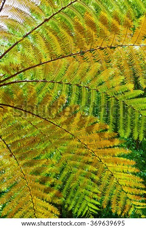 Beautiful pattern of great green, yellow and orange transparent textured leaves on tree fern branches in the tropical jungle. Environment, rainforest ecology, recovery and abstract natural backgrounds - stock photo