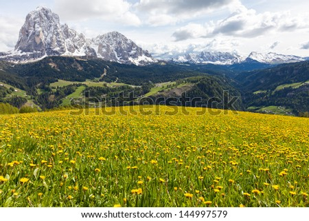 Beautiful, peaceful alpine scene in the Italian Dolomites mountains on a sunny day with clouds. Meadow with yellow dandelion flowers; forested hills and valleys leading up to the snowy peaks. - stock photo