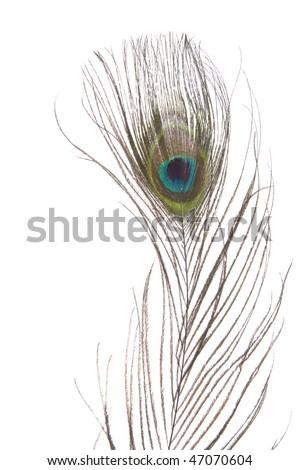 Beautiful peacock eye feather isolated on white background - stock photo