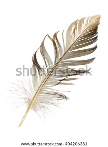 beautiful pen feather on a white background isolated