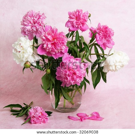 Beautiful peonies in a glass vase - stock photo