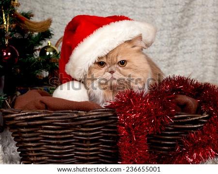 beautiful Persian cat in a Christmas hat  - stock photo
