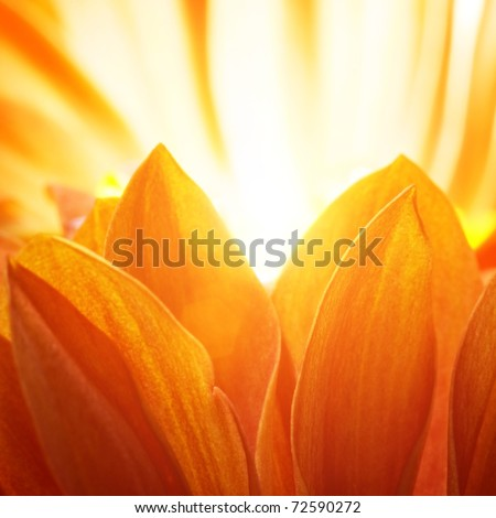 Beautiful petals of an orange flower - stock photo