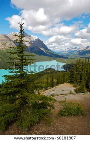 Beautiful Peyto Lake in the Canadian Rocky Mountains - stock photo
