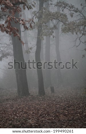 Beautiful photo of a beautiful foggy landscape
