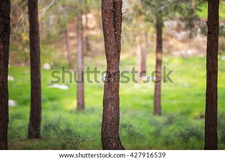 Beautiful photo of a tree trunk in the forest. - stock photo