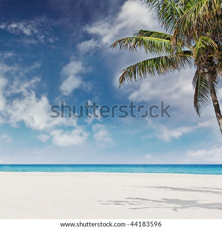 Beautiful photo of tropical paradise in Miami Beach, Florida on a sunny day with blue sky and ocean waters and palm tree with copy space for your message or logo - stock photo