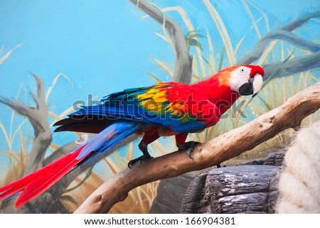 Beautiful photo of tropical parrot Ara macao or Scarlet Macaw - stock photo