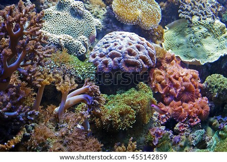 Beautiful photograph of colorful coral reef and algae aquatic plants in the Barcelona aquarium, Spain. Wild nature background. The underwater world. - stock photo