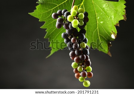 Beautiful photos of grapes