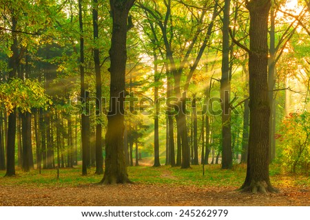 beautiful picture of the forest at dawn in the sun - stock photo