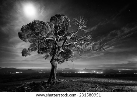 Beautiful pine tree at night in Chirivel at national park of Sierra de Maria-Los Velez, Almeria, Spain - stock photo