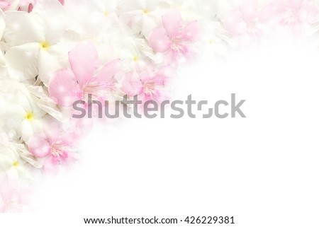 beautiful pink and white romance flower blossom in soft pastel color with bokeh light border and frame, concept for love valentine,wedding or any special events - stock photo