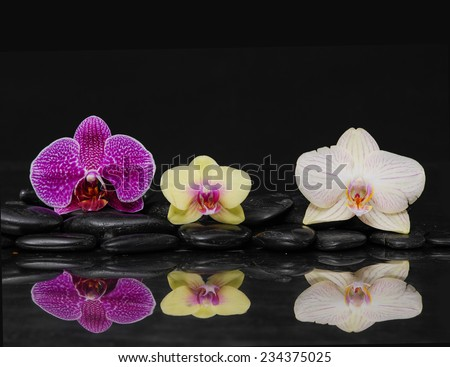 beautiful pink and yellow ,white orchid on pebbles reflection