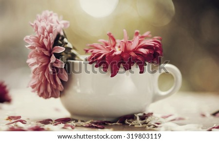 Beautiful pink aster flowers and falling petals - stock photo