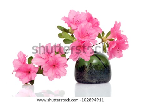 Beautiful pink azalea in glass vase on white - stock photo