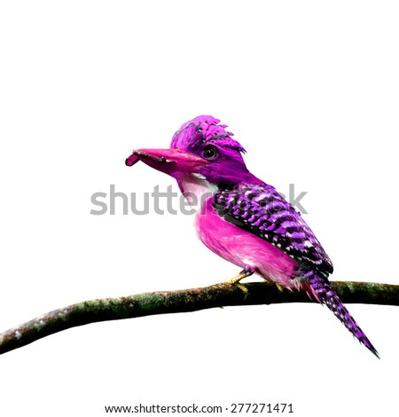 Beautiful pink bird perching on branch isolated on white background - stock photo