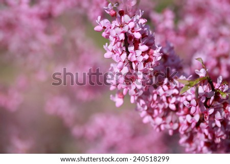Beautiful pink blossoming flower background - stock photo