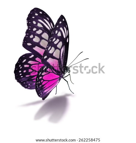 Beautiful pink butterfly isolated on white background. - stock photo