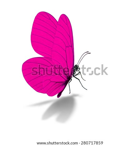 Beautiful pink butterfly, isolated on white background - stock photo