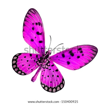 Beautiful Pink Butterfly, Tawny coster or Acraea violae, isolated on white background - stock photo