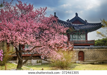 beautiful pink cherry blossom (Sakura) flower, and with vintage japan building background. - stock photo