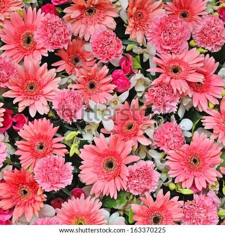beautiful pink chrysanthemum flower - stock photo