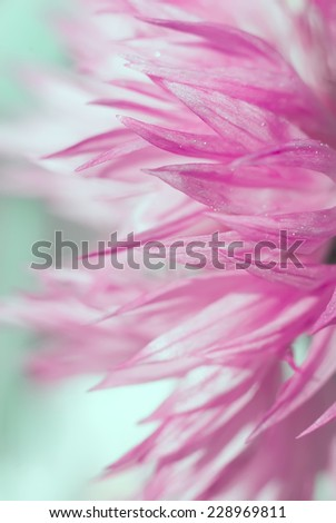 Beautiful pink cyan flower background. Color filters and shallow depth of field. Place for your text. - stock photo